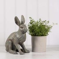 Hare - Medium