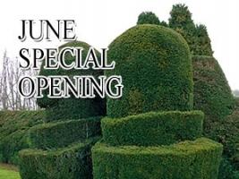 Mid Summer Special Opening